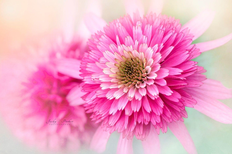 12 flower photography by jacky parker