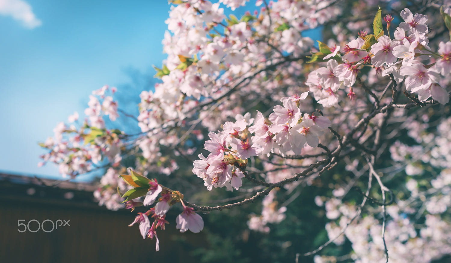 lovely spring photography by tommy lee