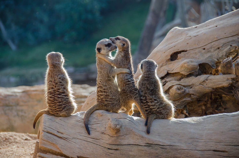 cute animals love photography by ulio jaime sanchez verdu