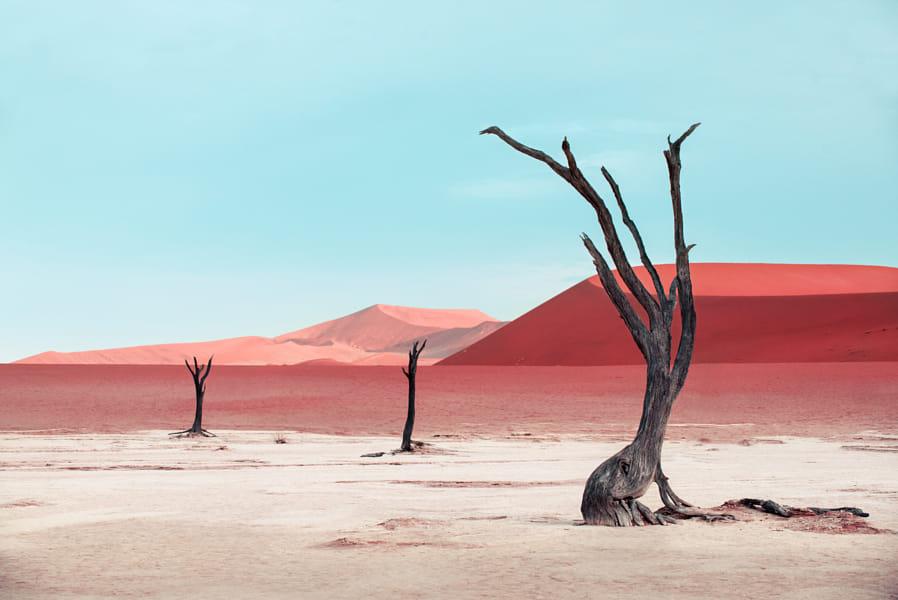 minimalist photography single tree by pietro olivetta