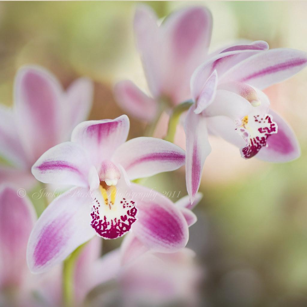 14 beautiful flower photography by jacky parker