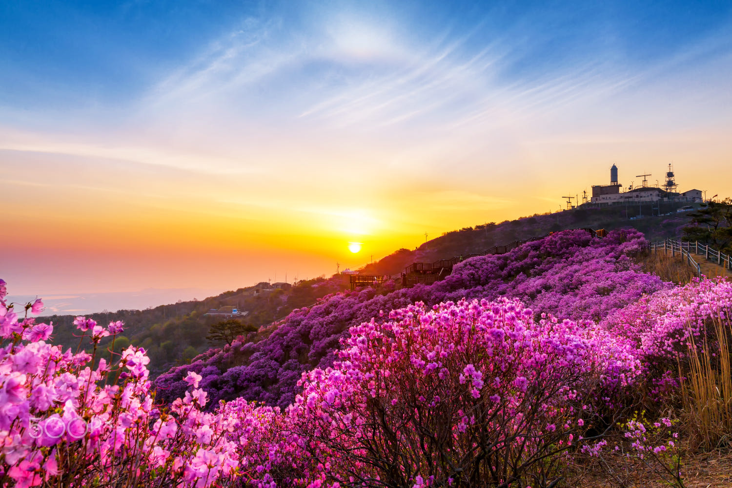 colorful spring photography by gwangseop eom