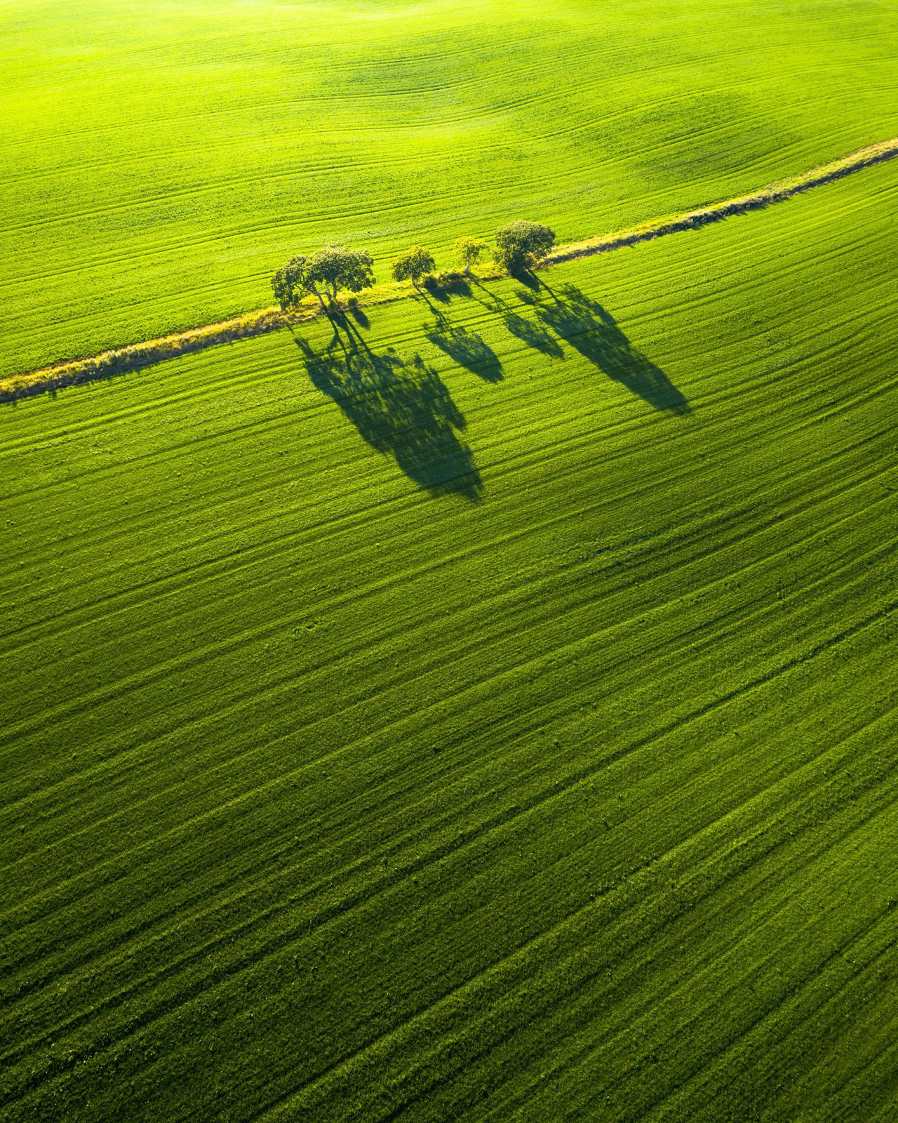 minimalist photography tree