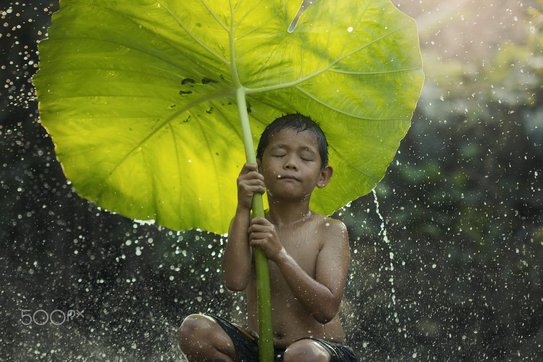 stunning rain photography freshness by visoot uthairam