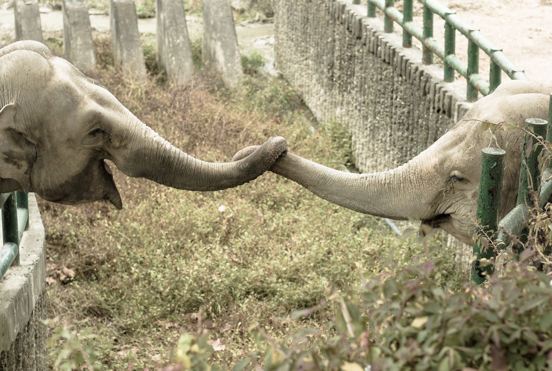 pretty animals love photography elephant by zinga kim