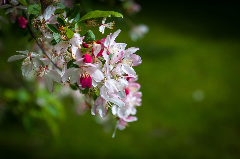 beautiful spring photography by pankaj bhakta