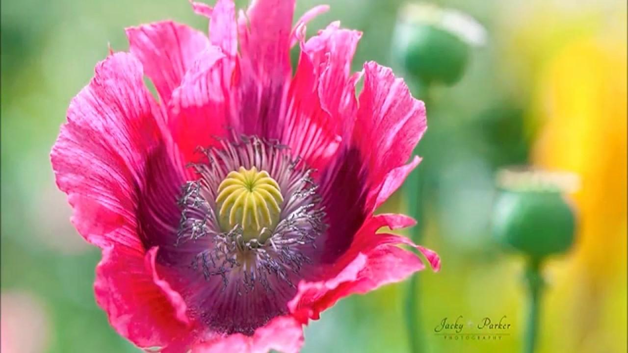 flower photography by jacky parker