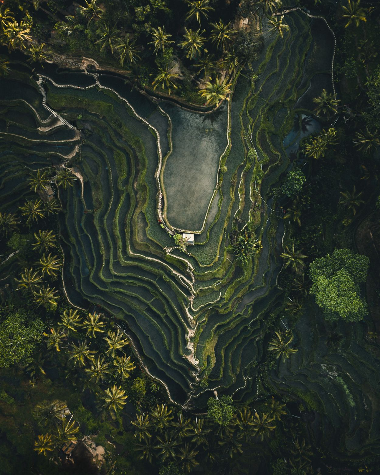 aerial photography tegallalang bali indonesia by witold ziomek