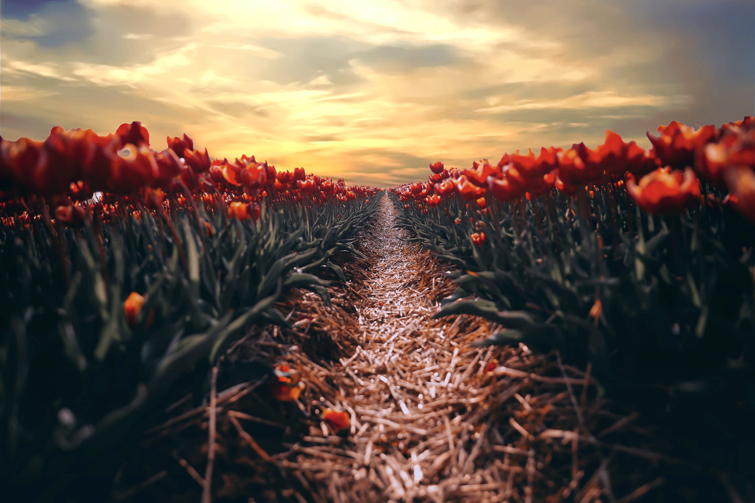 beautiful spring photography by kj