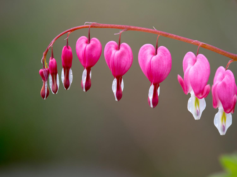 amazing spring photography by hongbin wang