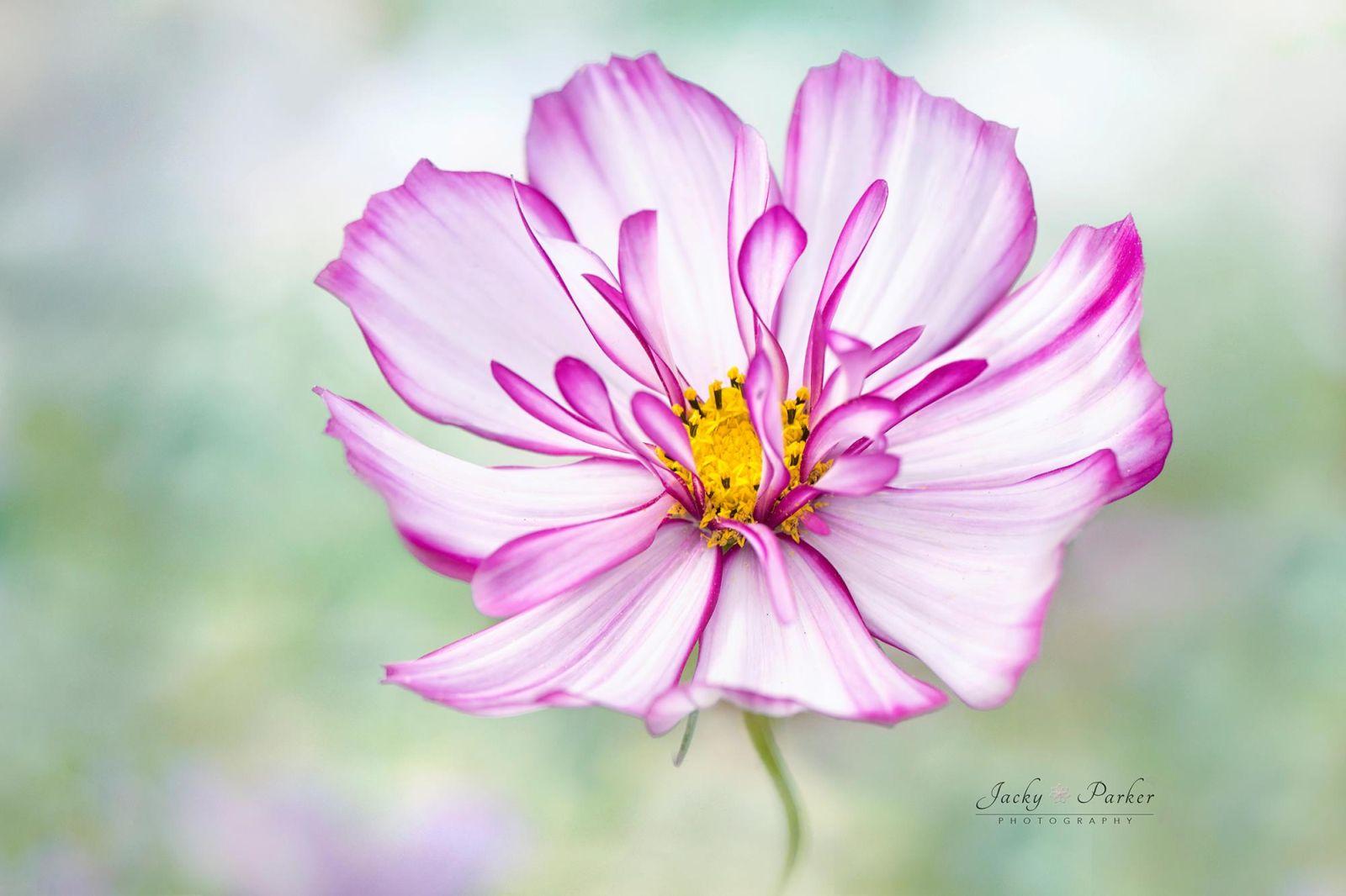 3 beautiful flower photography by jacky parker