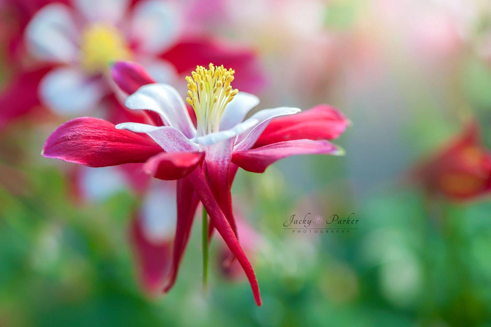 4 beautiful flower photography by jacky parker