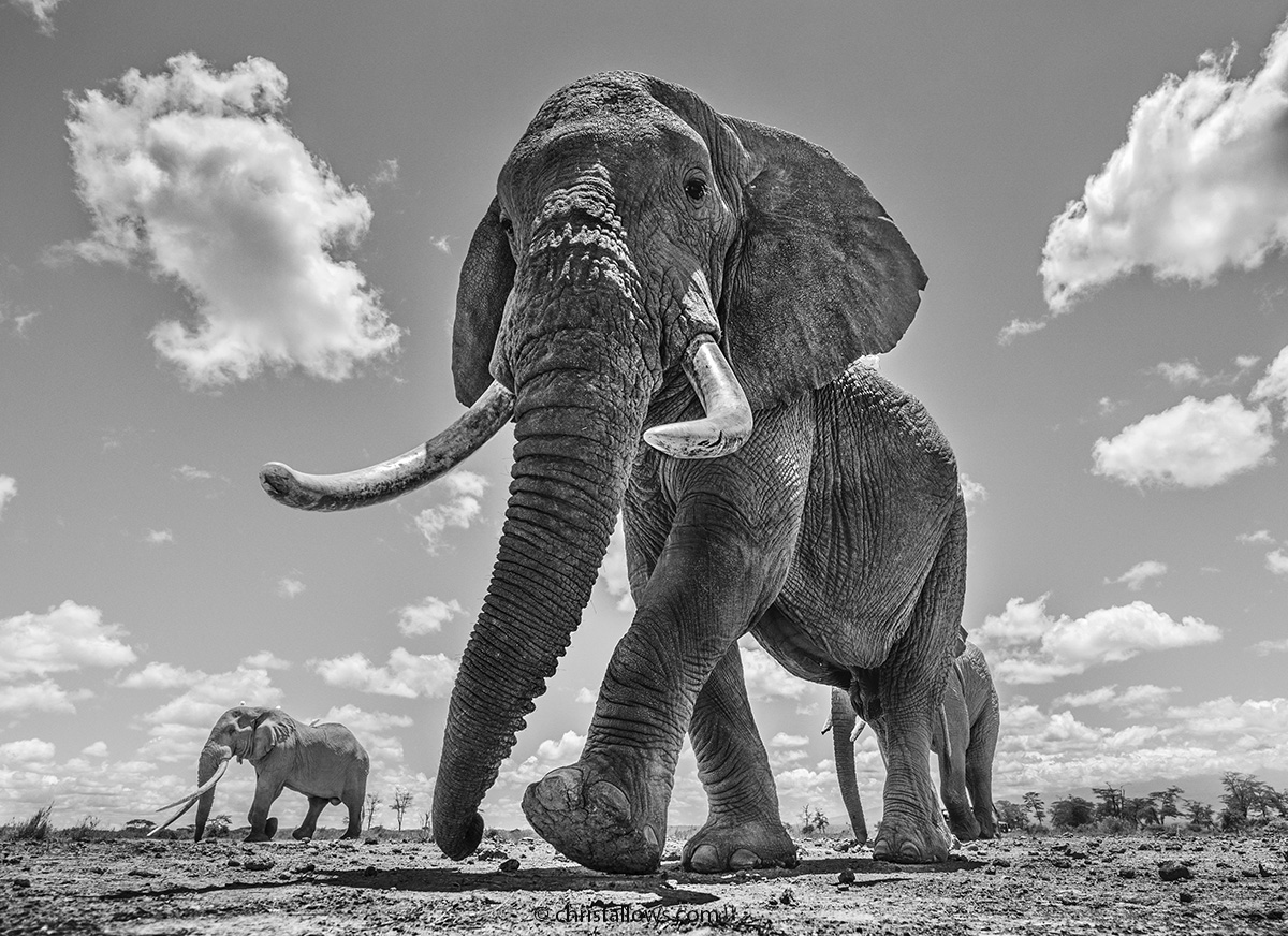 4 elephant photography by chris fallows