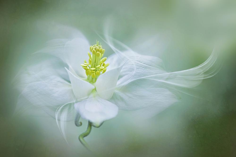5 beautiful flower photography by jacky parker