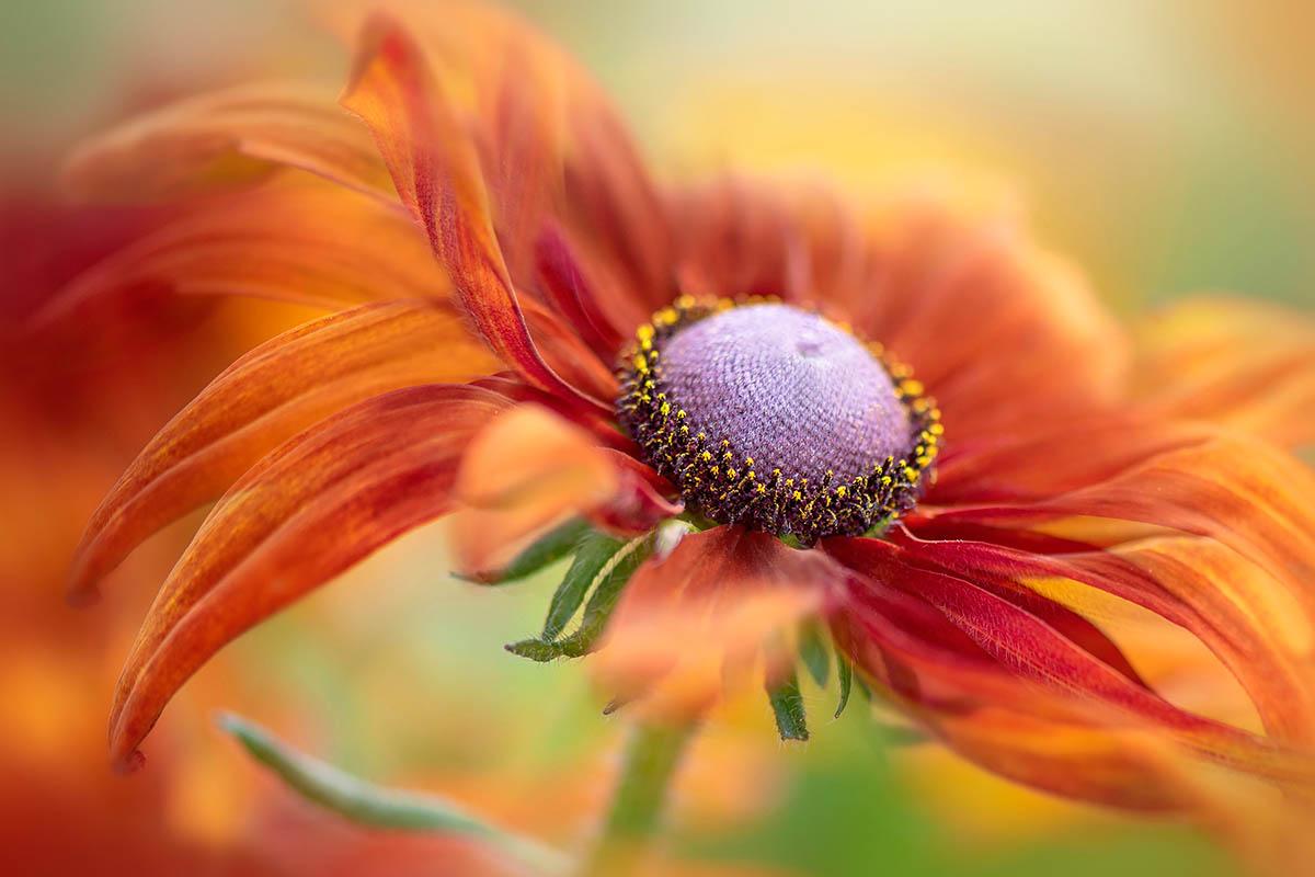 beautiful flower photography by jacky parker