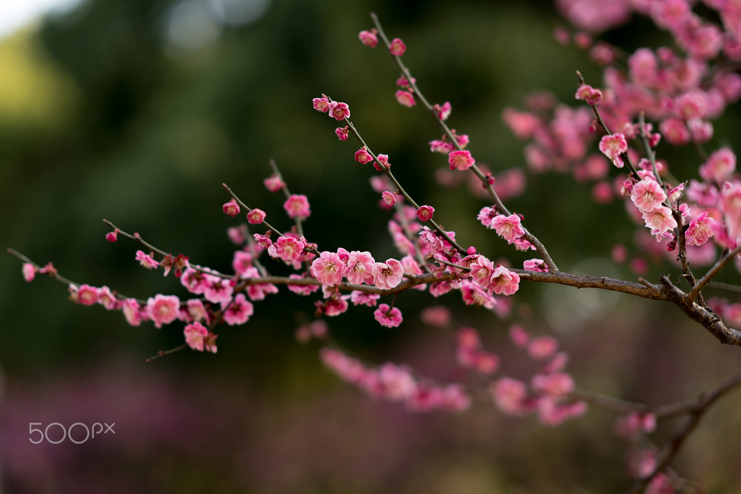 beautiful spring photography by colin hou