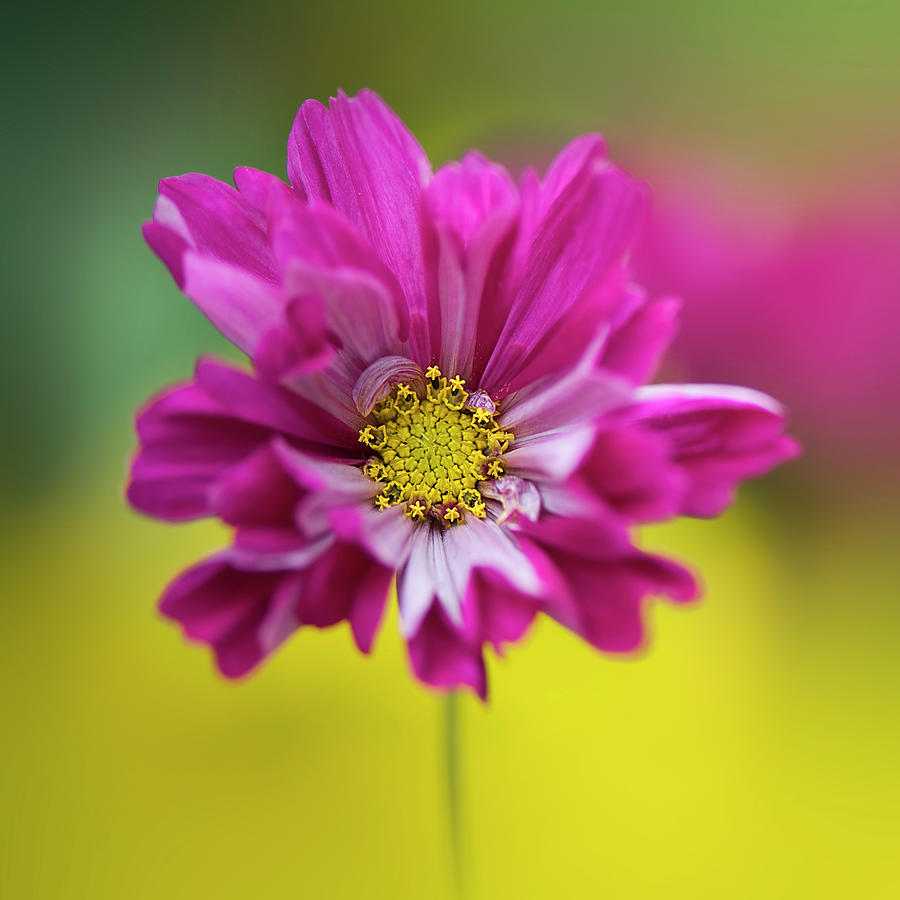 7 flower photography by jacky parker