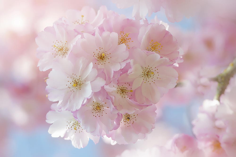 8 flower photography by jacky parker