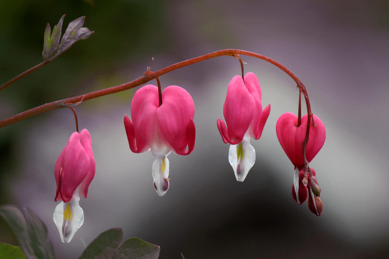 lovely spring photography by sonja cvorovic