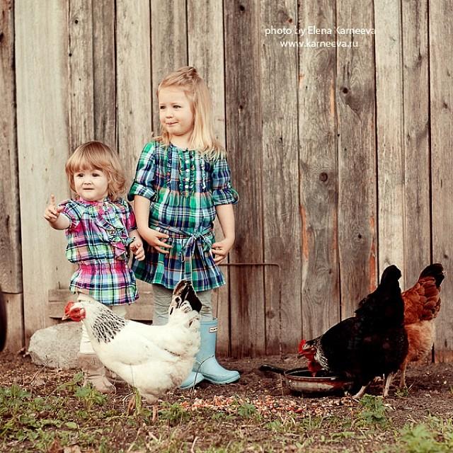 chicken kid photography by elena karneeva