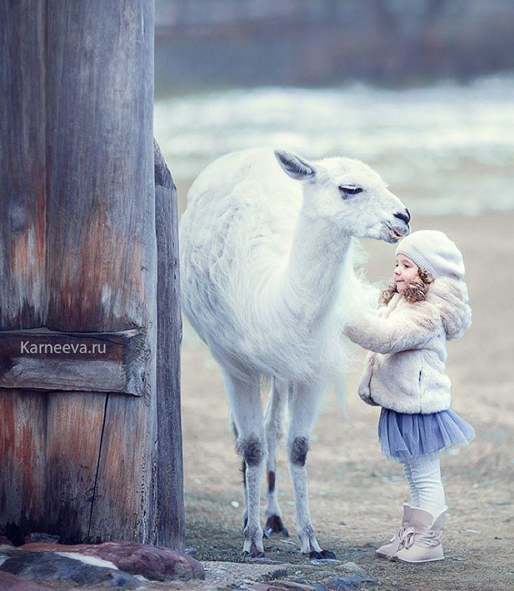 6 camel kid photography by elena karneeva