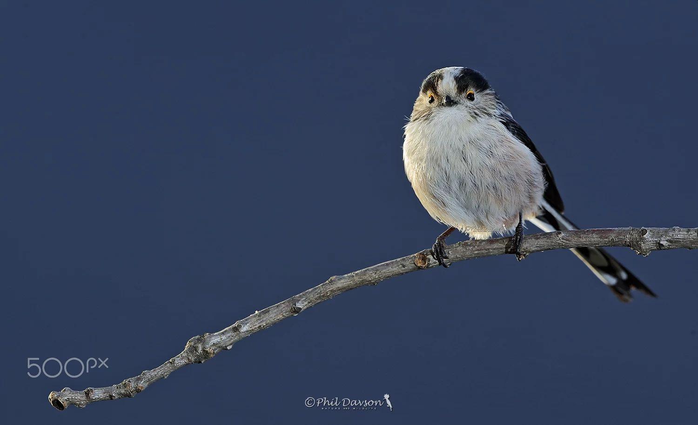 bird photography simpatica ospite by phil davson