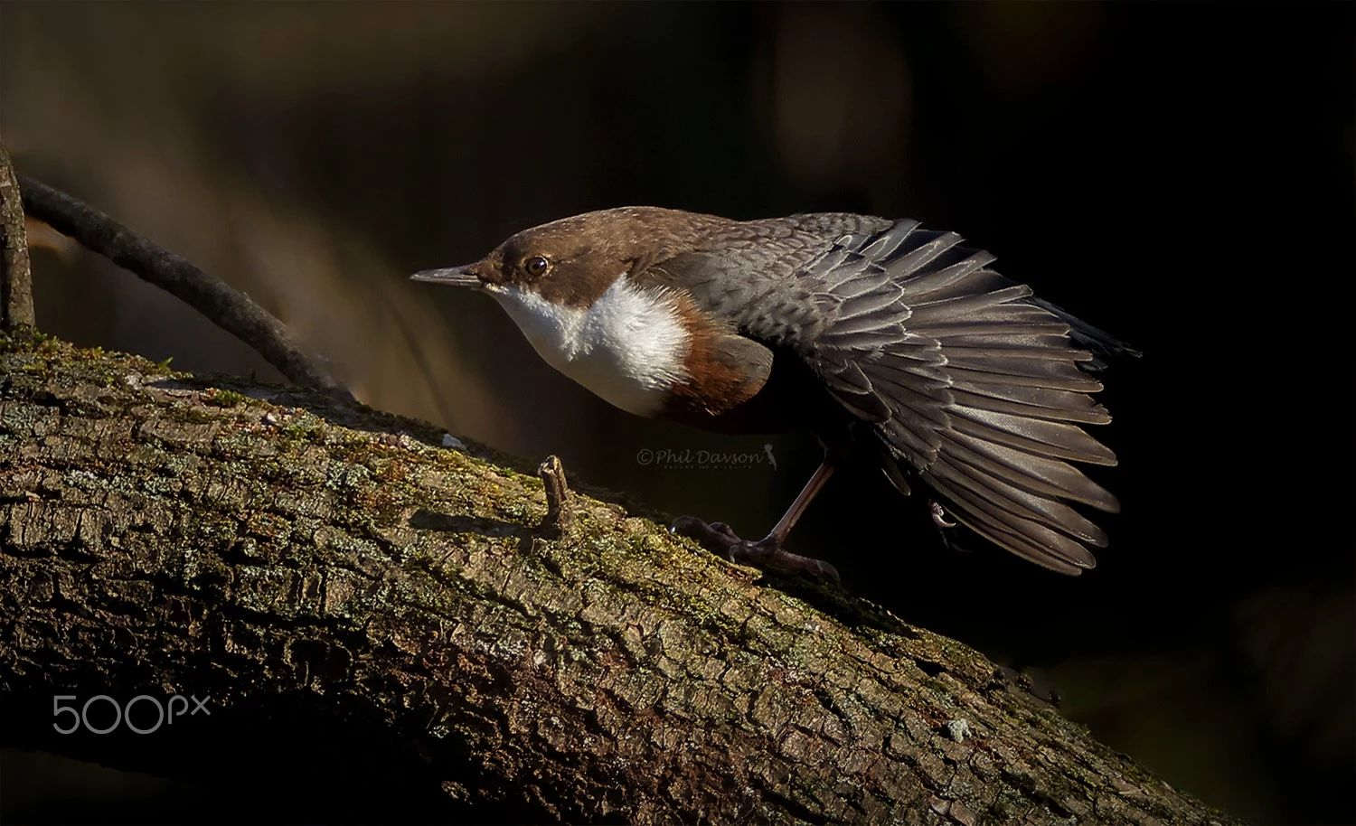 bird photography stretching sunlight by phil davson