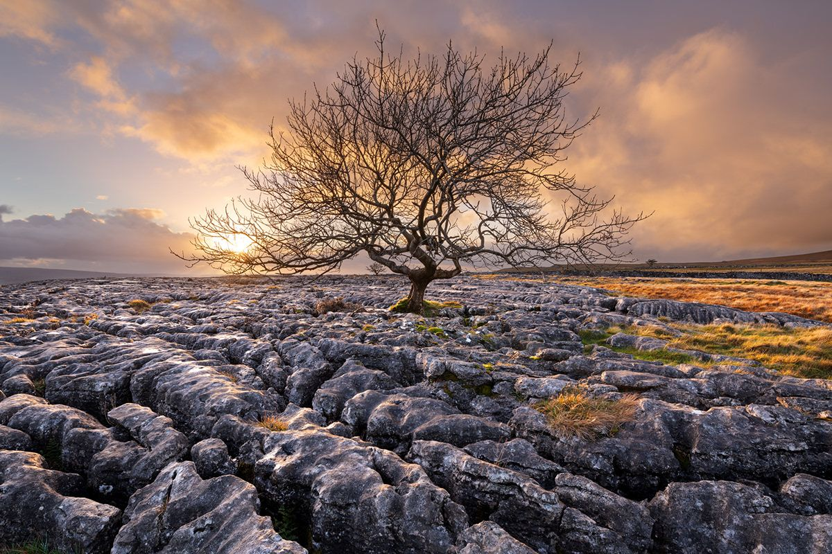 tree photography lonely tree by wanderingsoul