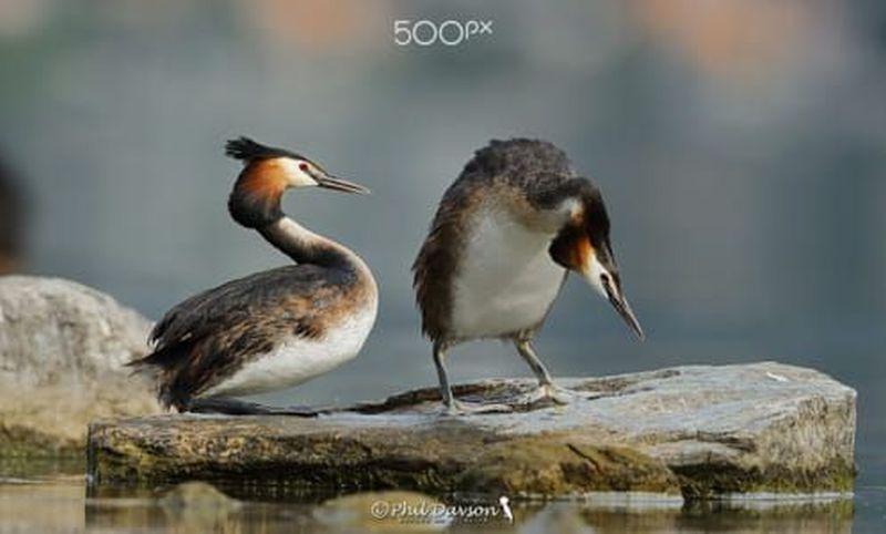 bird photography art flight by phil davson
