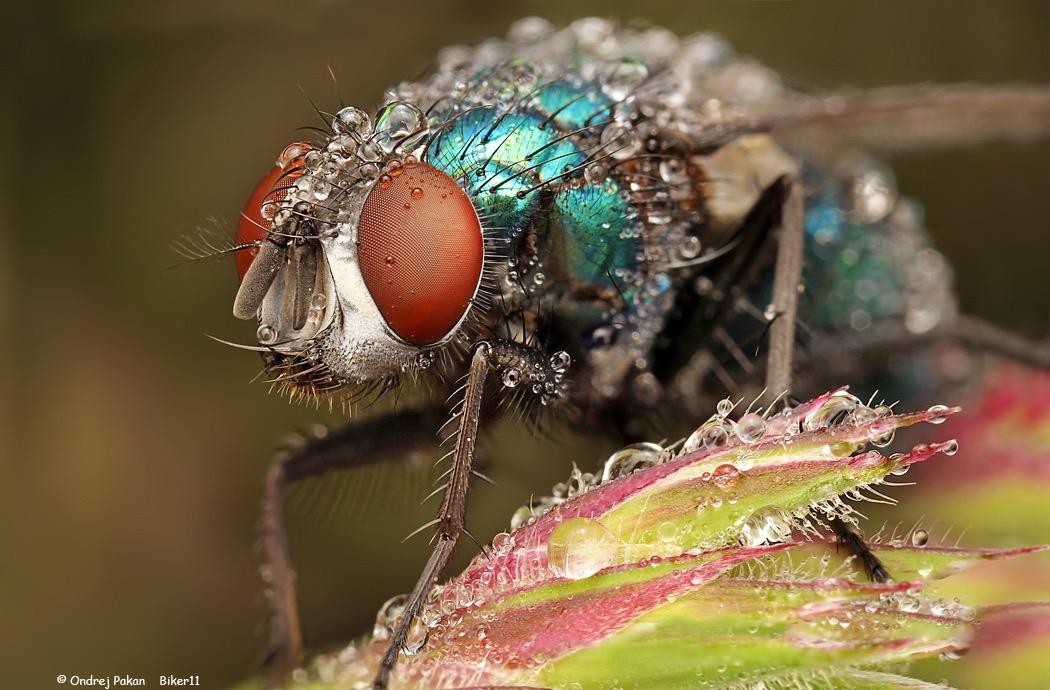 macro photography wasp by ondrej pakan