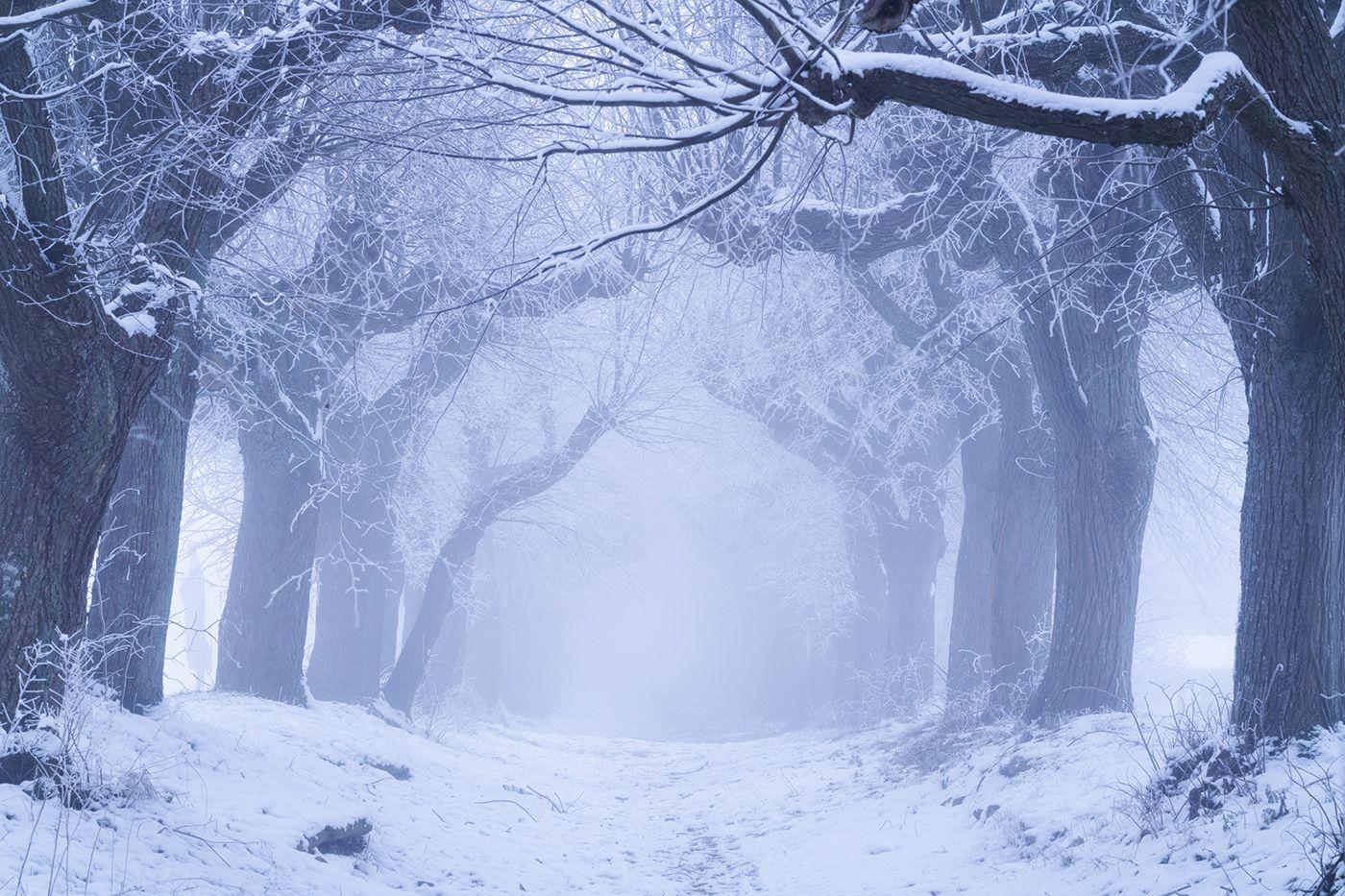 tree photography winter night tree by wanderingsoul