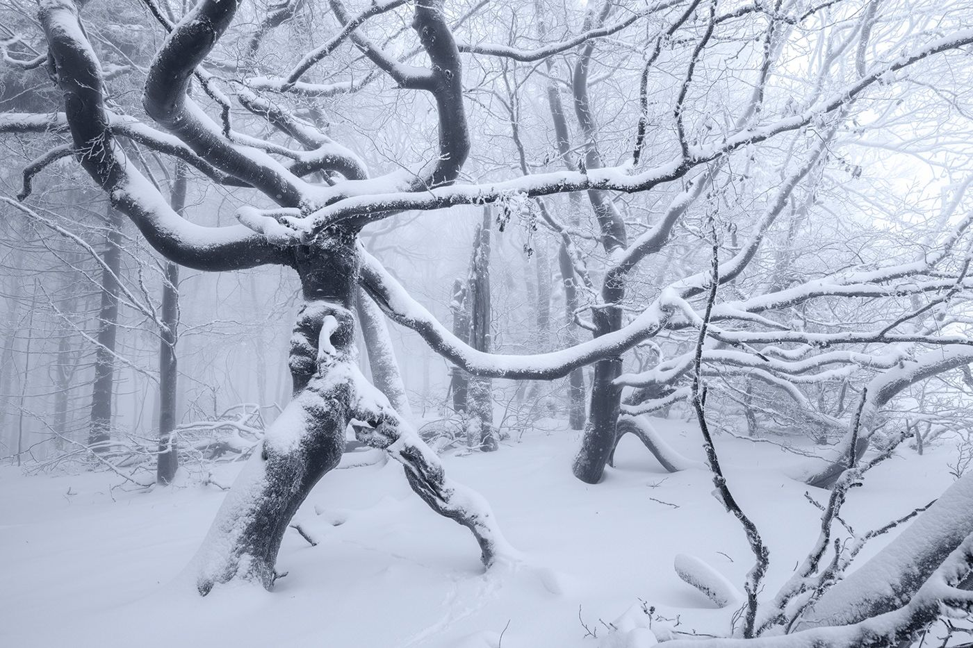 tree photography snow covered trees by wanderingsoul