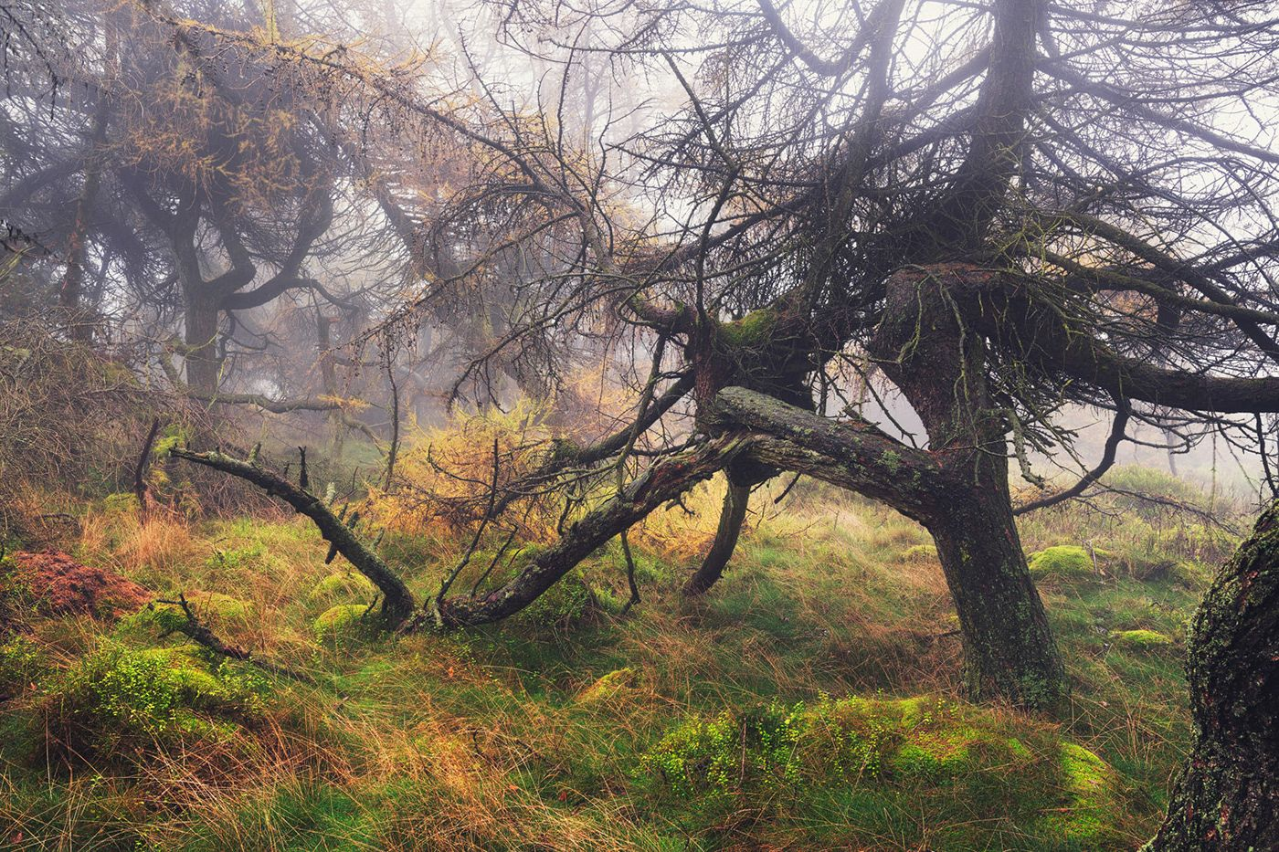 tree photography by wanderingsoul