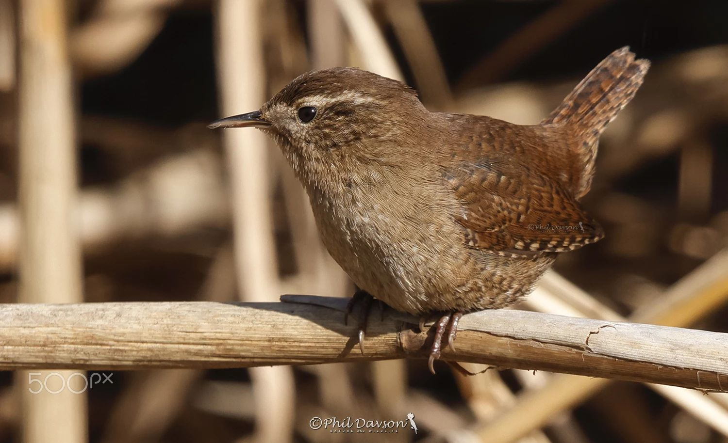 bird photography close personal by phil davson