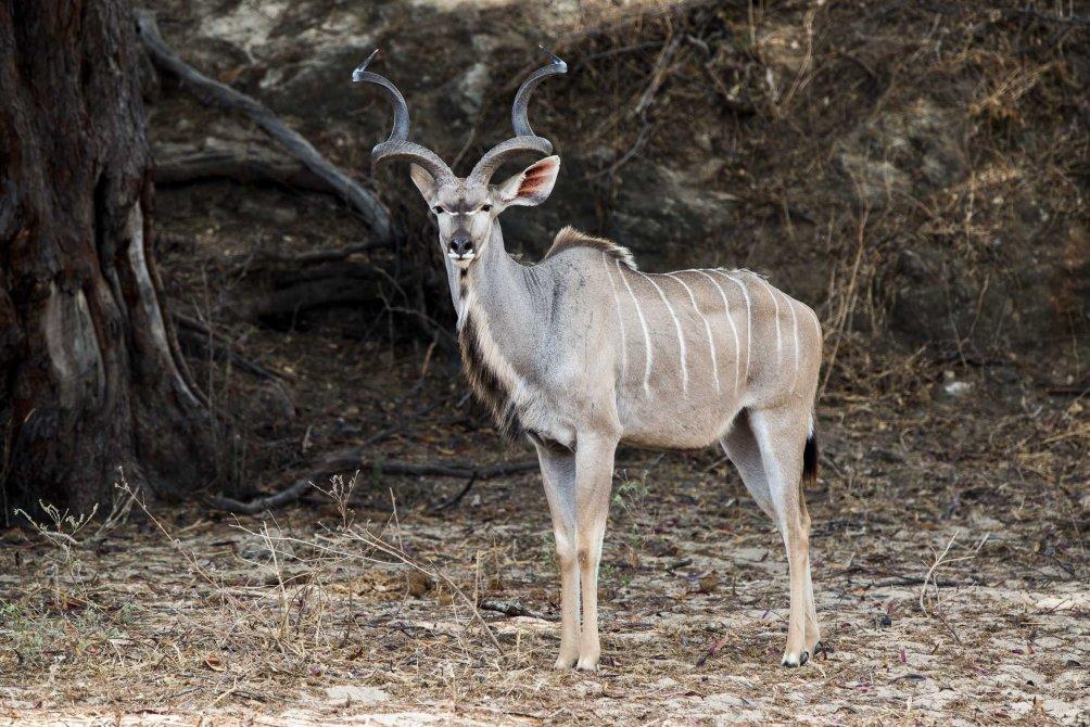 wildlife photography deer paul joynson hicks