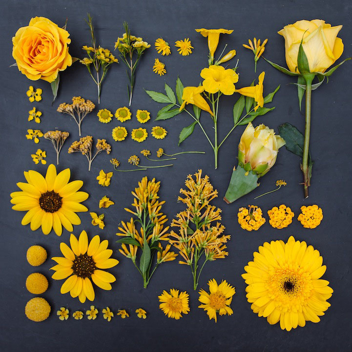 1 arrange objects photography idea yellow flowers emily blincoe