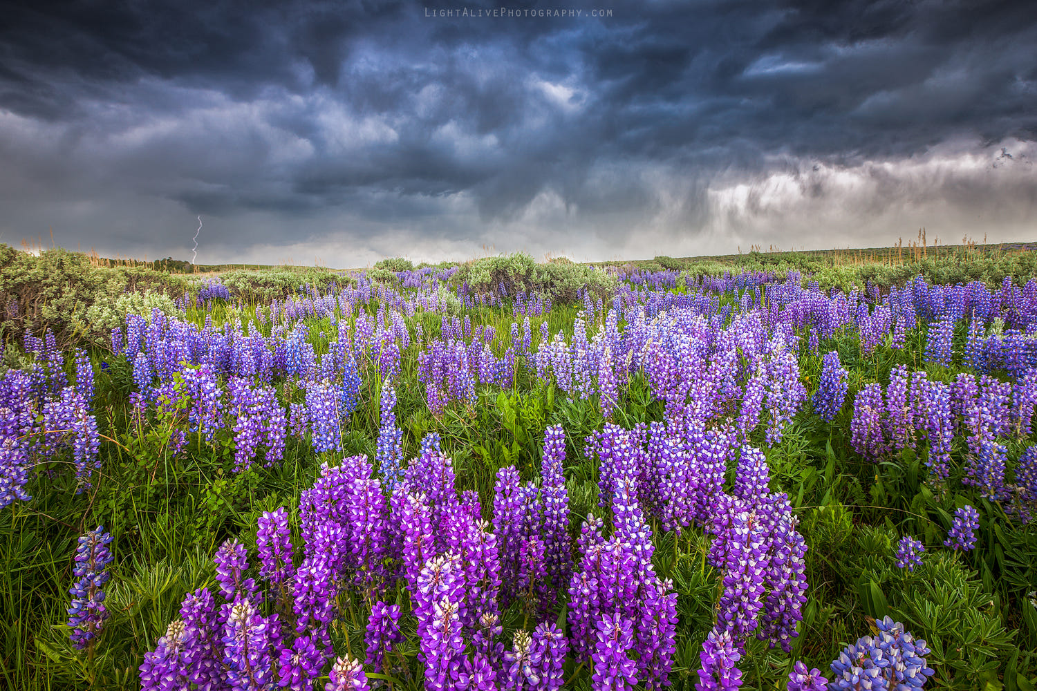 sky photography flowers by nicolaus wegner