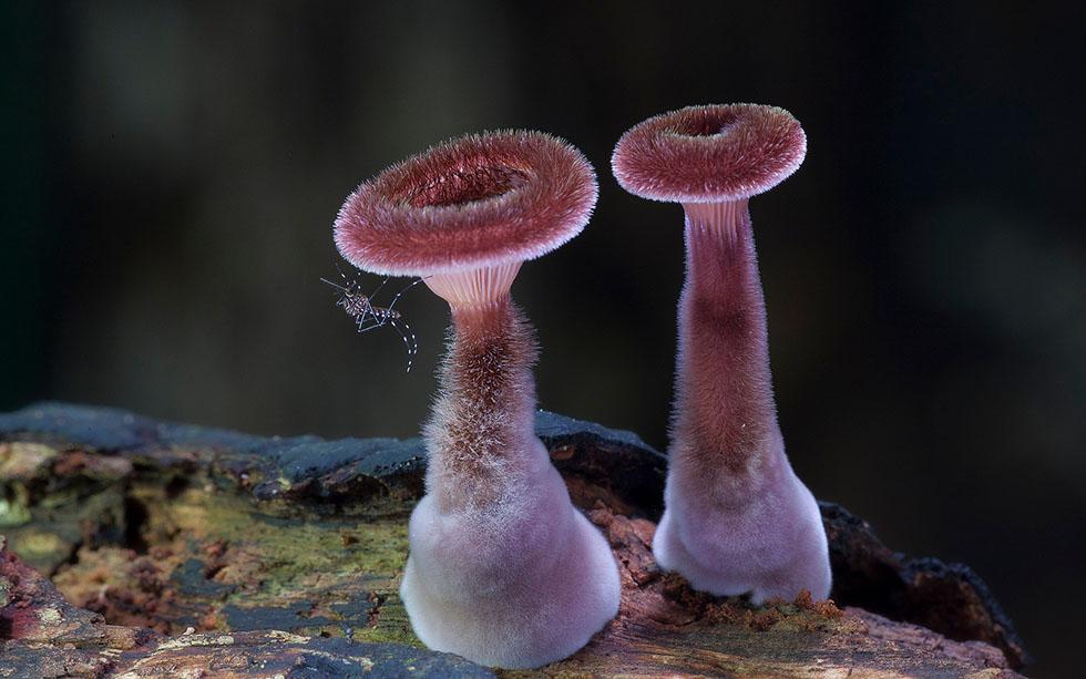 mushroom fungus photography fungi steve axford
