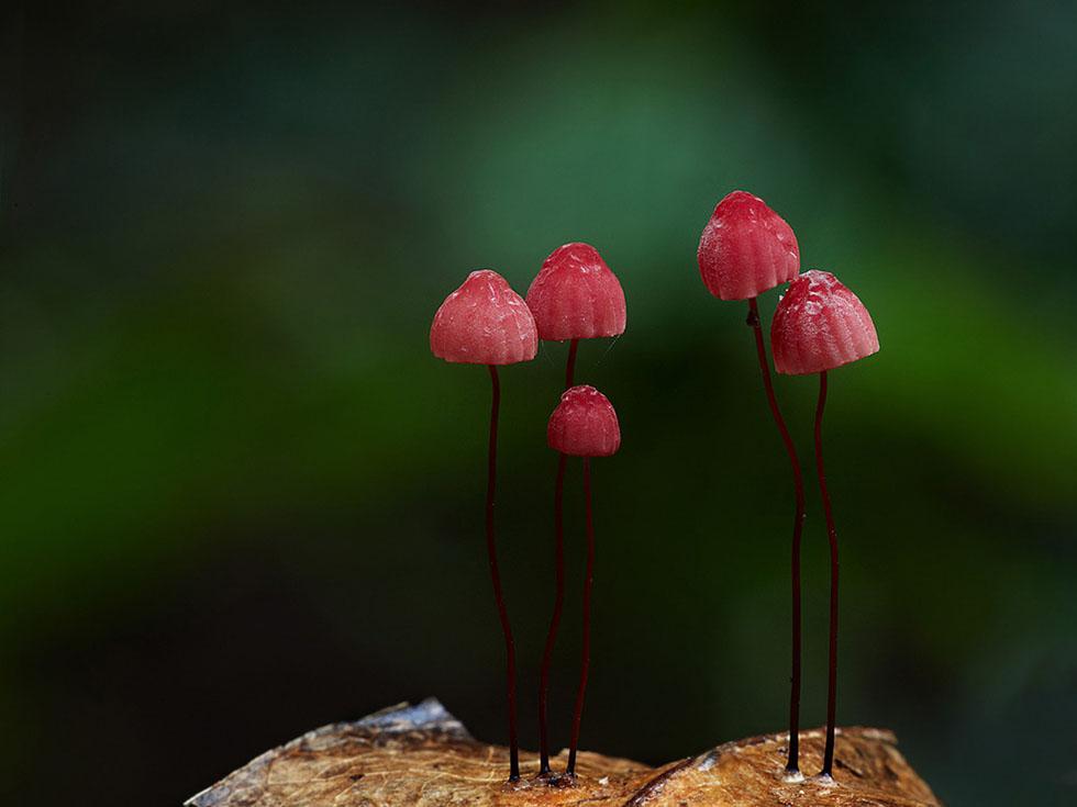 16 mushroom fungus photography fungi steve axford