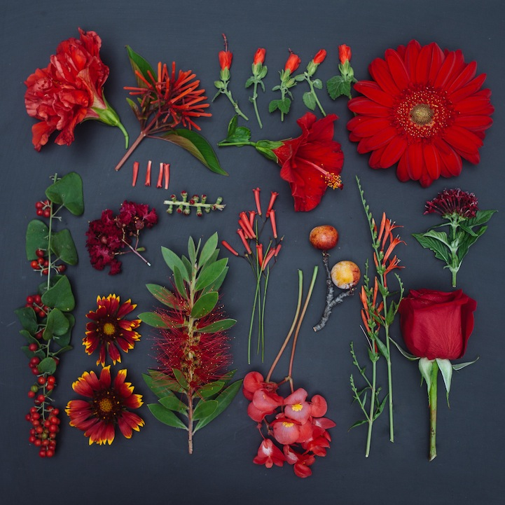 2 arrange objects photography idea red flowers emily blincoe