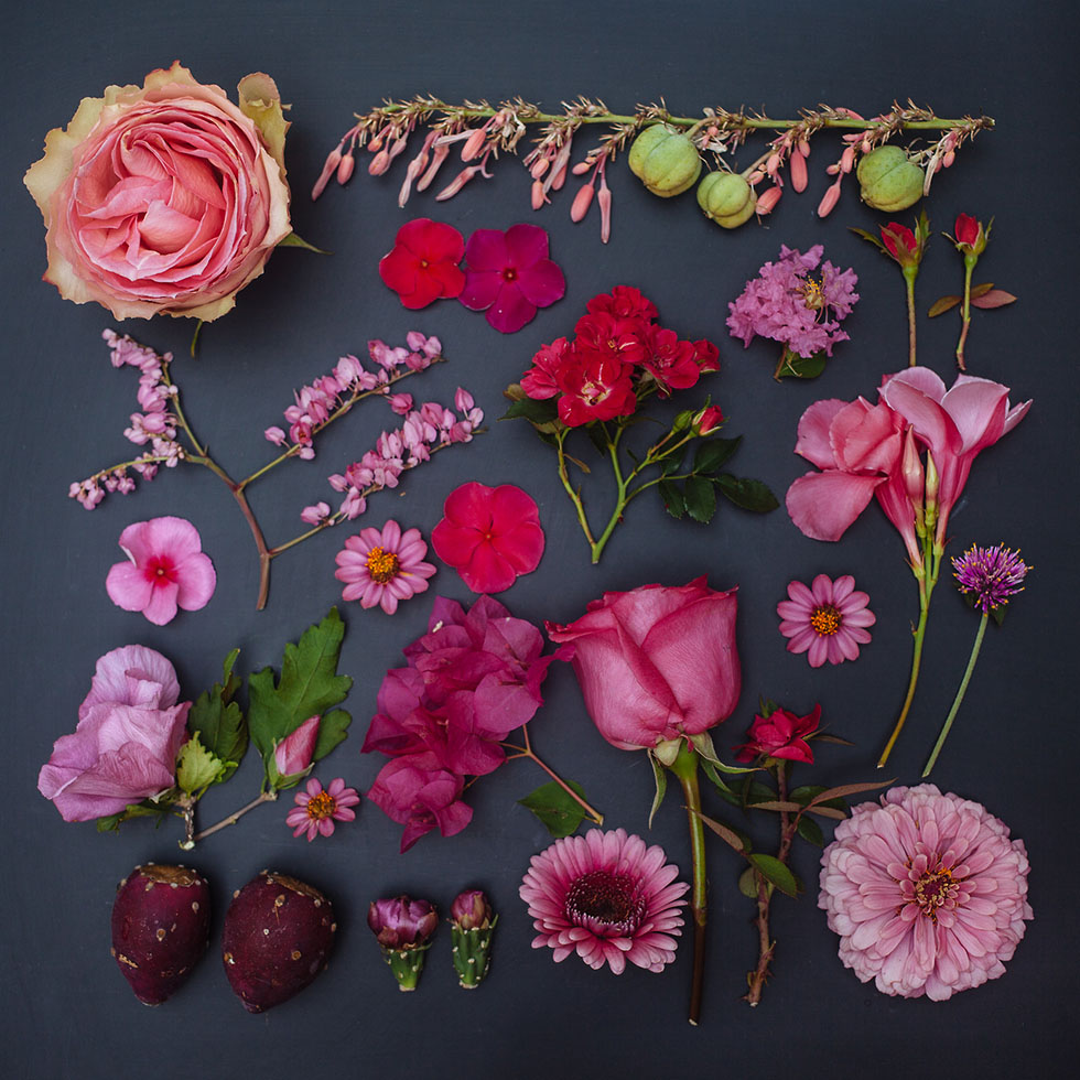 3 arrange objects photography idea rose flowers emily blincoe