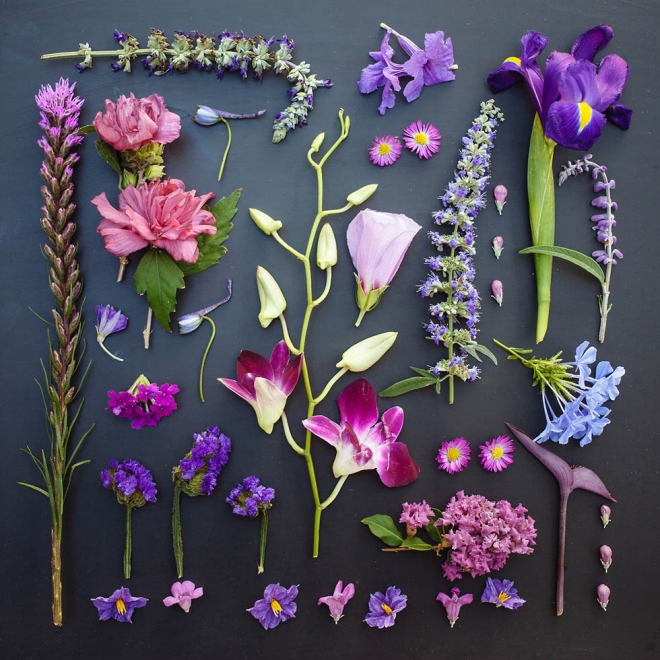 5 arrange objects photography idea flowers emily blincoe