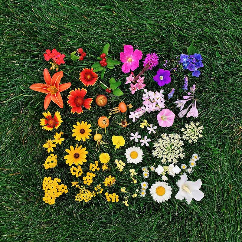 arrange objects photography idea colorful flowers emily blincoe