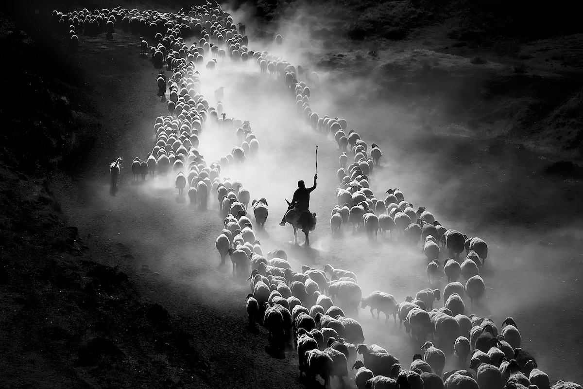 movement photography award winning good shepherd by dilek uyar