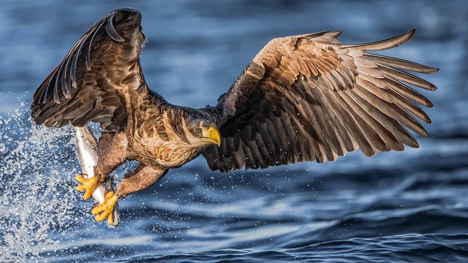 eagle photography wildlife