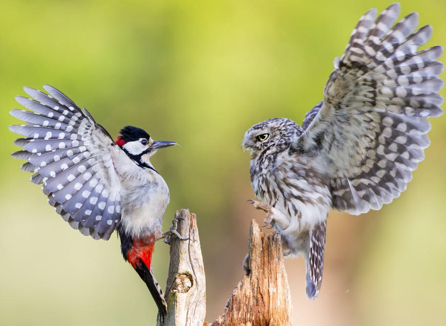 perfect time bird photography
