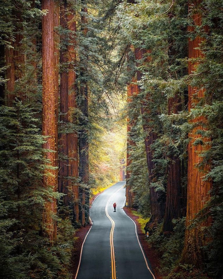nature photography big trees road redwoods park by ryan resatka