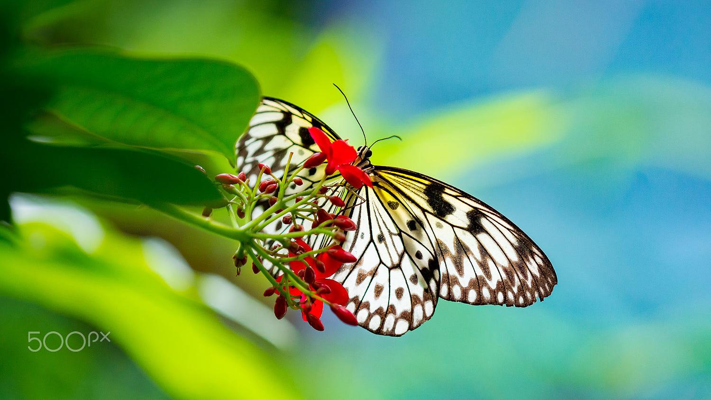 photography butterfly by sergio david spadavecchia
