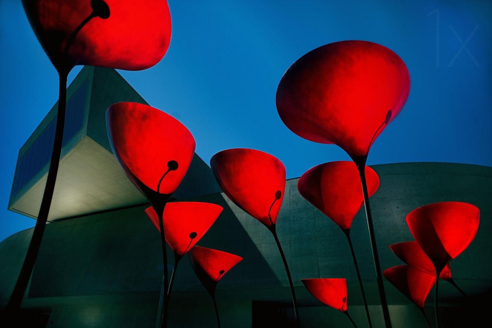 photography tulips by fulvio pellegrini