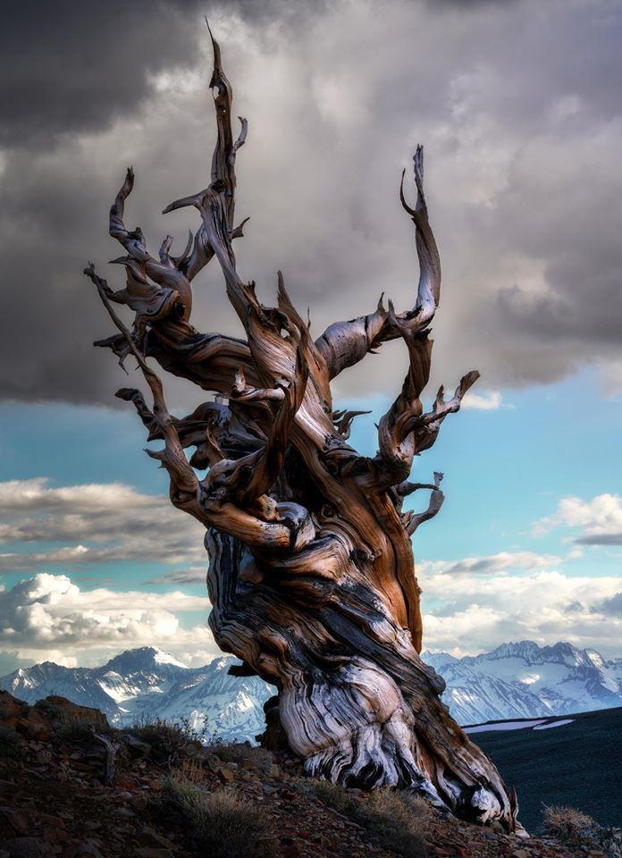 tree photography california usa by carlos cuervo